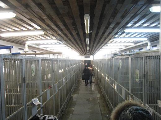 собак в вольерах с будками
